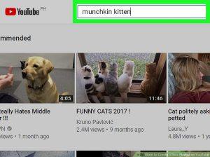 جستجو ویدئو